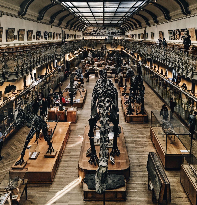 Blick in ein Naturkundemuseum mit Dinosaurierskeletten